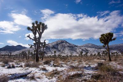 Joshua Trees and Snow Covered Mountains in Southern California-Ben Horton-Photographic Print