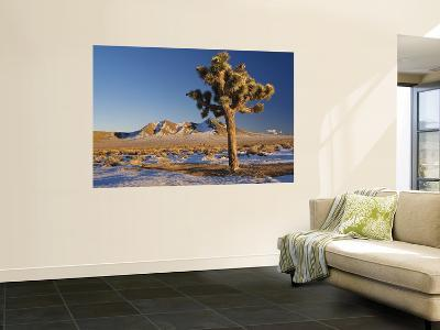 Joshua Trees at Darwin Plateau Covered with Snow after Winter Storm-Witold Skrypczak-Wall Mural