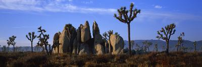 Joshua Trees Grow Among Rock Formations-Bill Hatcher-Photographic Print