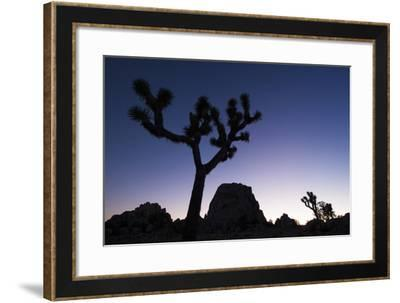 Joshua Trees, Yucca Brevifolia, Silhouetted at Dusk-Gabby Salazar-Framed Photographic Print