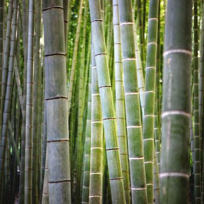 Bamboo 2 by JoSon