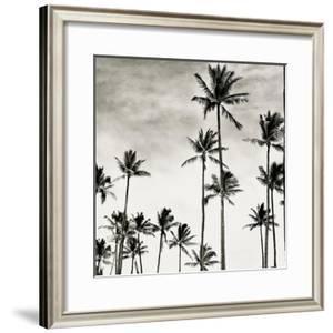 Coconut Palms I 'Cocos nucifera', Kaunakakai, Molokai by JoSon
