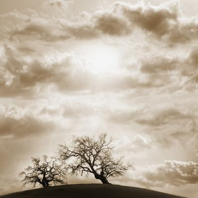 Trees and Cloudy Sky by JoSon