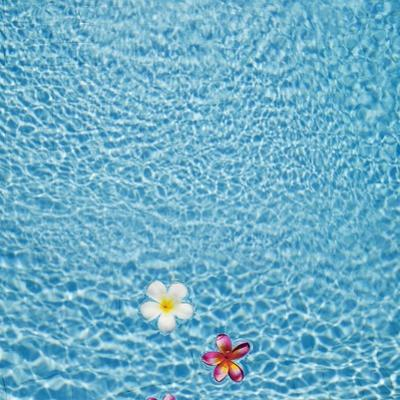 White and pink frangipani floating in the pool, Bali, Indonesia by JoSon