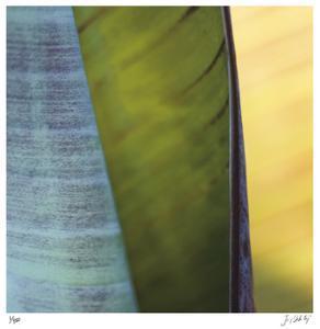 Banana Leaves I by Joy Doherty