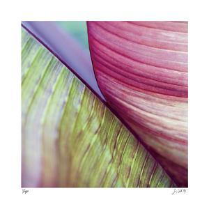 Banana Leaves II by Joy Doherty