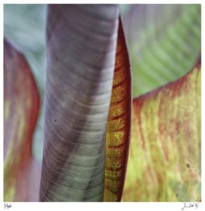 Banana Leaves IV by Joy Doherty