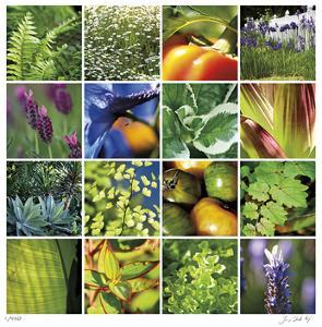 Garden Square Ensemble by Joy Doherty