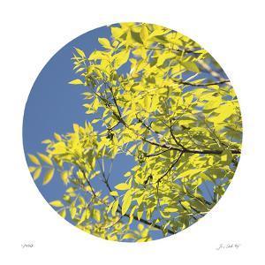 Looking Up Circle by Joy Doherty