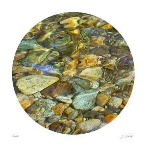 Oasis Pool Circle by Joy Doherty