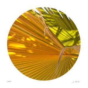 Oasis Shade Circle 1 by Joy Doherty
