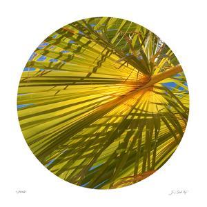 Oasis Shade Circle 2 by Joy Doherty