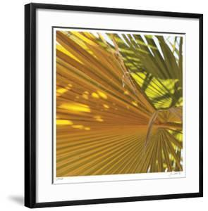 Oasis Shade Square 4 by Joy Doherty