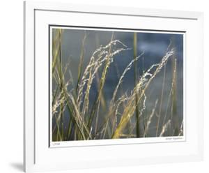 River Grasses I by Joy Doherty
