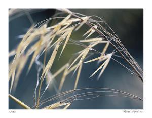 River Grasses II by Joy Doherty