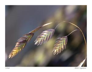 River Grasses III by Joy Doherty
