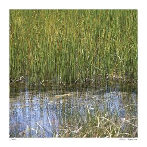 River Reeds II by Joy Doherty