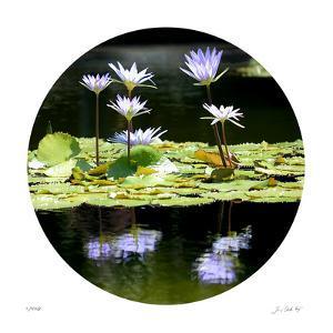 Serenity Reflection 2 by Joy Doherty