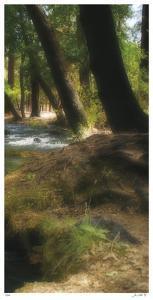 Serenity Stream III by Joy Doherty