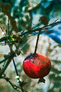 Jerusalem Pomegranate, 2016 by Joy Lions