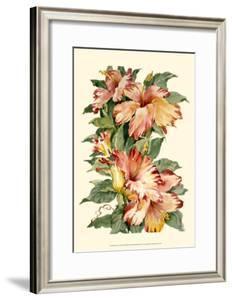 Hibiscus II by Joy Waldman