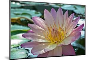 Purple Lotus Flower by joyfuldesigns