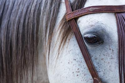 Close Up of Horse Wearing Bridle, Sierra De Gredos, Avila, Castile and Leon, Spain
