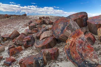 Pieces of Petrified Trees - Wood, Petrified Forest National Park, Arizona, USA, February 2015