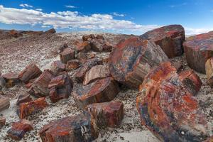 Pieces of Petrified Trees - Wood, Petrified Forest National Park, Arizona, USA, February 2015 by Juan Carlos Munoz