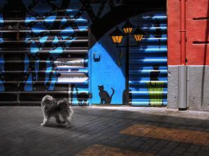 The Street Cats. by Juan Luis