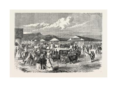 Judging the Cattle at the Plymouth Agricultural Show, UK, 1865--Giclee Print