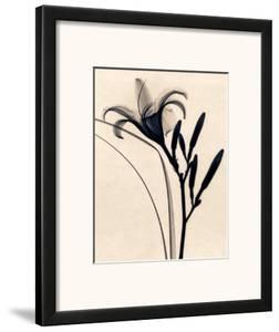 Daylily by Judith Mcmillan