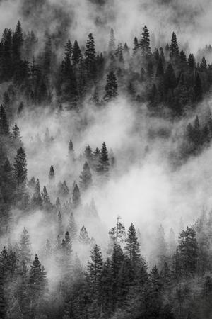 California. Yosemite National Park. Black and White Image of Pine Forests with Swirling Mist by Judith Zimmerman