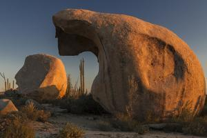 Mexico, Baja California. Boojum Trees and Boulder Formations at Sunset Near Catavina by Judith Zimmerman