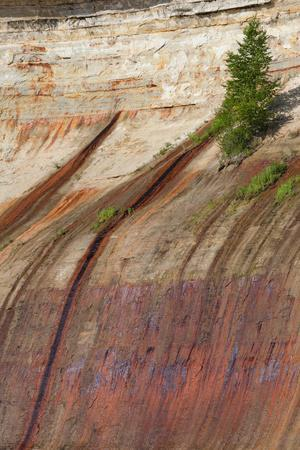 Mineral Seep with Pine Tree Growing, Lake Superior, Pictured Rocks National Lakeshore, Michigan