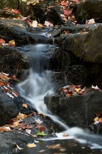 USA, Maine. Autumn leaves along small waterfall on Duck Brook, Acadia National Park. by Judith Zimmerman