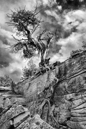 Grand Canyon And Juniper Trees Art Print Home Decor Wall Art Poster C
