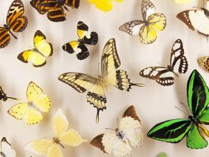 Exotic Butterfly Specimens on Display at Audubon Insectarium on Canal Street by Judy Bellah