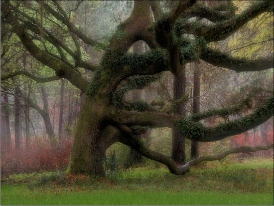 judy-griffin-entwined-in-the-mist