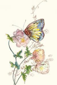 Butterfly Design 2 by Judy Mastrangelo