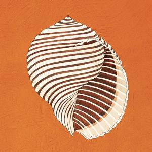 Cayman Quartet A by Judy Shelby