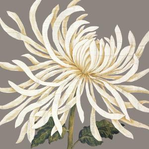 Glorious Whites I by Judy Shelby