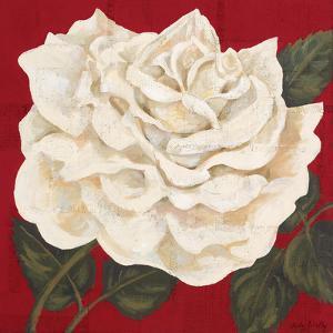 Rosa Blanca Grande I by Judy Shelby