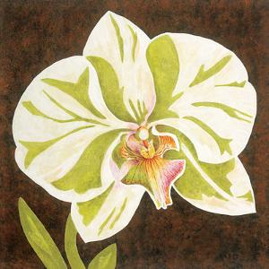 Surabaya Orchid Petites A by Judy Shelby