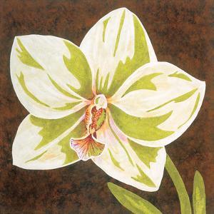 Surabaya Orchid Petites B by Judy Shelby