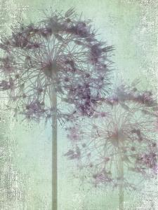 Allium Globe Master by Judy Stalus