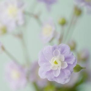 Blue Flower by Judy Stalus