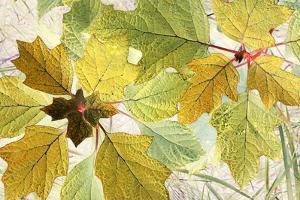 Golden Oak by Judy Stalus