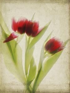 Parchment Flowers I by Judy Stalus