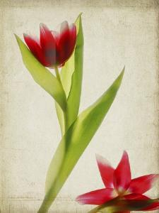 Parchment Flowers II by Judy Stalus